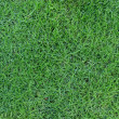 Green grass texture — Stock Photo #38832329