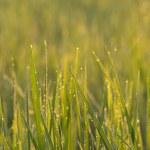 Green nature — Stock Photo