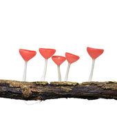 Orange mushroom — Stock Photo