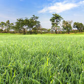 Gröna naturen — Stockfoto