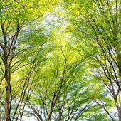 Branches and leaves of background & texture. — 图库照片