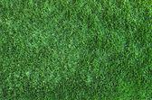 Green grass texture  — Стоковое фото