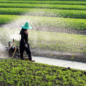 Gardener watering plot — Foto Stock