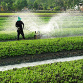 Gardener  watering vegetable plot — Foto Stock