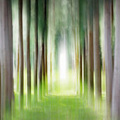 Row of pine trees — Stockfoto