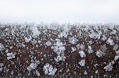 The branch covered with snow — Stock Photo