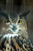 Lonely owl — Stock Photo