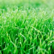 Close up fresh green grass with dew on daylight background — Stock Photo