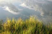 Fundo de natureza idílica de grama verde e nuvens em reflexões de água — Foto Stock