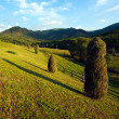 Summer landscape in the Carpathian, mountain pasture on sunset — Stock Photo