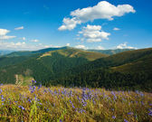 Summer landscape in the Carpathian mountain — Foto Stock