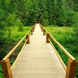 Wooden bridge leading into the green spruce forest — Stock Photo