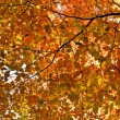 Background of yellow autumn leaves, season fall — Stock Photo