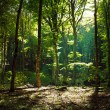 Mystical green forest in the morning — Stock Photo