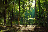 Mystical green forest in the morning — Stockfoto