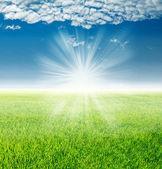 Yükselen güneş ışınları altında yatay, yeşil çimenler bahar — Stok fotoğraf