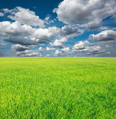 Growing field of green grass on a background of blue sky — Stock Photo