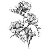 Sketch of flowers — Stockvector