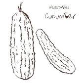 Cucumber — Stock Vector