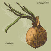 Onion colour — Stock Vector