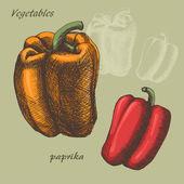 Paprika colour — Stock Vector