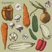 Vegetebles colour set — Stock Vector