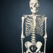 Постер, плакат: Human skeleton body on a grey background