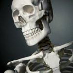 corps de squelette humain sur un fond gris — Photo #13447281