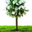 Concept, money tree on grass isolated — Stock Photo