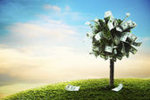 Concept, money tree on grass — Stock Photo