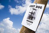 Потеряли собаку плакат прибил к lightpost — Стоковое фото