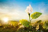 Koncepcja ekologiczny energia — Zdjęcie stockowe
