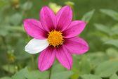 Flower mutant — Stock Photo