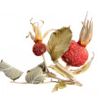 Dried rose hips isolated on white — Stock Photo