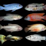 Set of aquarium fishes on black background — Foto de Stock   #39061295