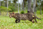 Stray Cat Walking in Long Grass — Stock Photo