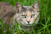 Tortoiseshell-tabby Cat Sitting in the Grass — Stock Photo