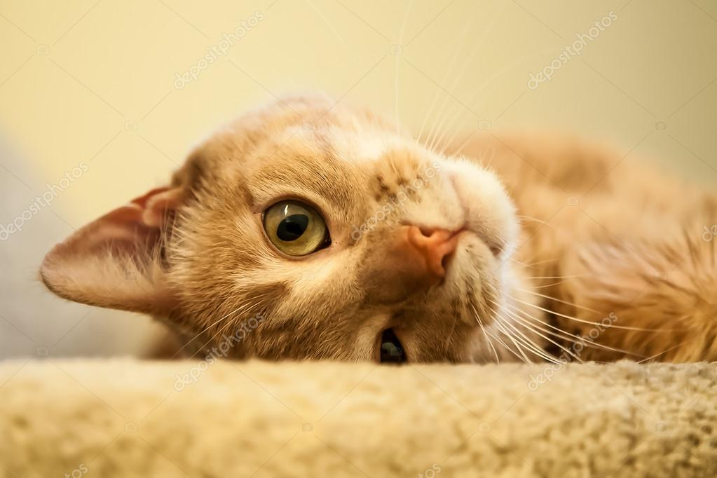 Herbivores Wild Animal Best Blog Cute Ginger Cat Pictures