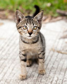 Cross-eyed Tabby Kitten on the Road — Stock Photo
