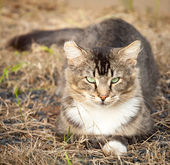 Brown Tawny Tabby Cat Sitting on Dry Grass — Stock Photo