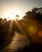 Wooden Boardwalk with Setting Sun Through Trees and Sun Flare — Stock Photo