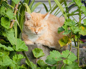 Happy Ginger Tabby Cat Sitting in Garden with Eyes Closed — Stock Photo