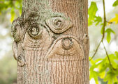 Knots in Old Tree that Look like Human Eyes — Stock Photo