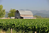 Barn and corn field — Foto de Stock
