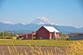 Red Barn and Rainier — Stock Photo