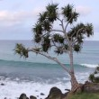 Burleigh Heads — Stock Video