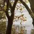 Water rippling on to mangroves — Stock Video