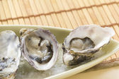 Oysters Natural — Stock Photo