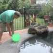 Salting A Swimming Pool — Stock Video
