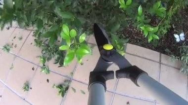 Pruning Shears — Stock Video
